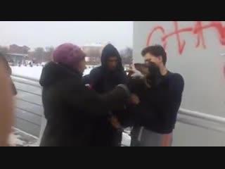 Dog_in_cold_river