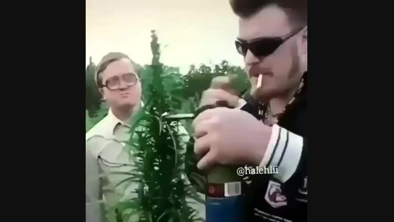 Трава зелёная