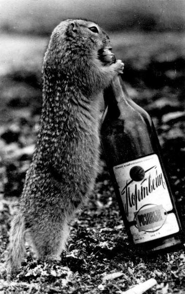 Лемминг пытается испить портвейна.