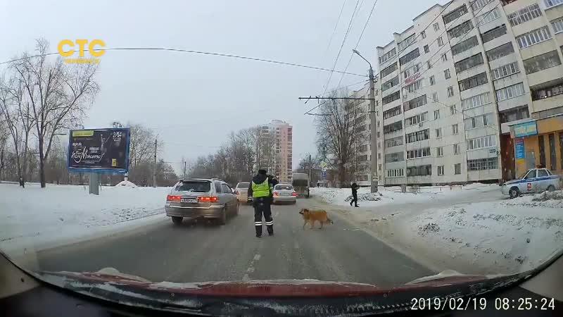 Сотрудник Госавтоинспекции помог бездомной собаке
