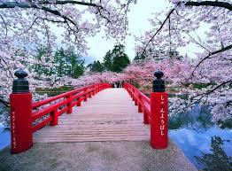 #куда_поедем_office_free В Японии цветет сакура! Минула весенняя ночь Белый рассвет обернулся Морем вишен в цвету. (с) Мацуо Басё.