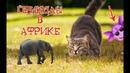 Приколы с котами и смешная ОЗВУЧКА – Смешные коты 2018 в АФРИКЕ от PSO
