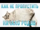 Как понять, что кошка скоро родит Начало родов у кошки