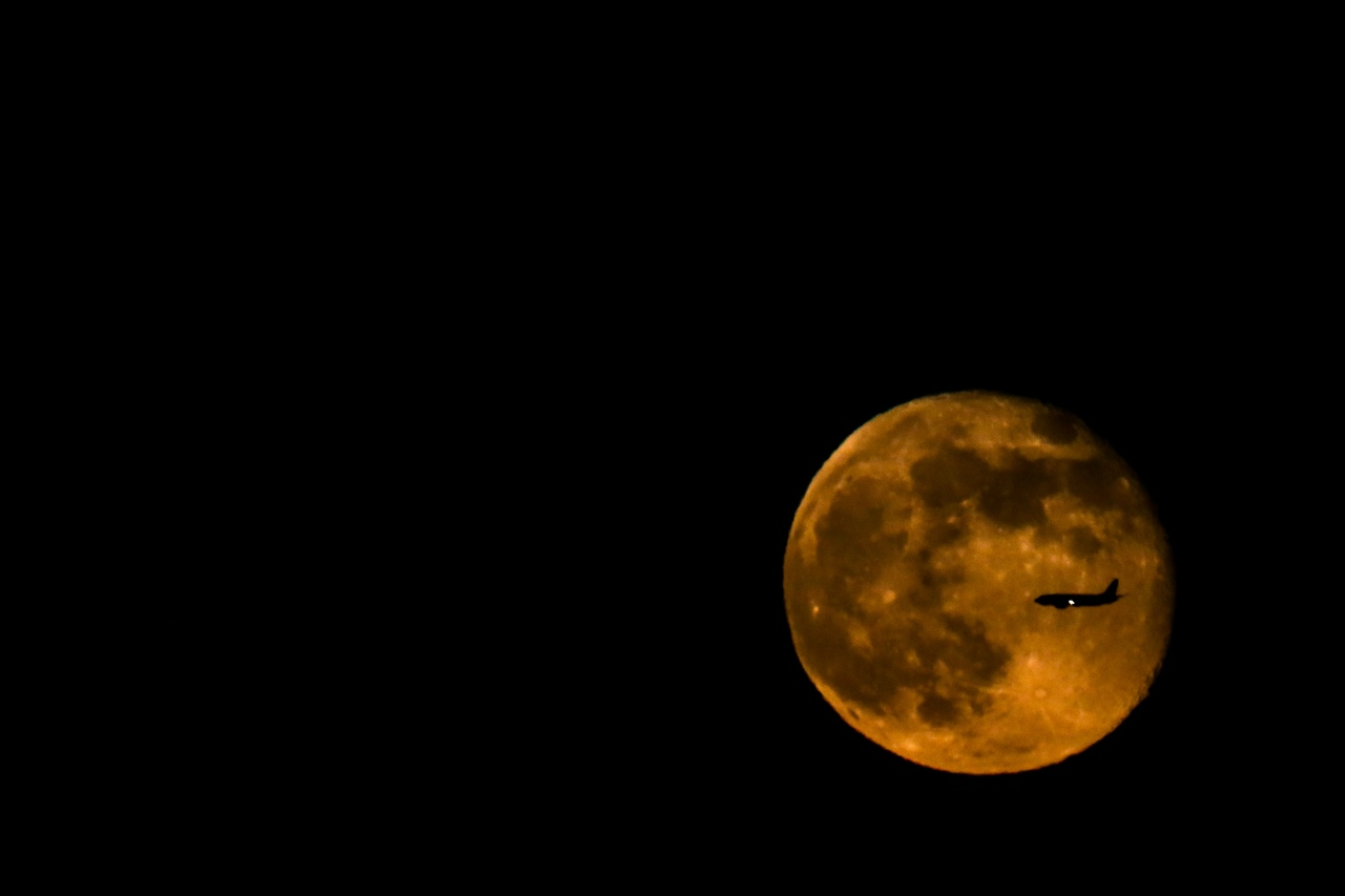 Собака открыла багажный отсек самолёта на высоте 4 тысяч метров при его подлёте к Москве