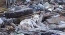 Спасение собаки, брошенной на мусорной свалке