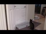 Кот открывает двери [ https://vk.com/CINELUX ]