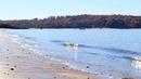 Sea Cliff Binaural Waves 110418