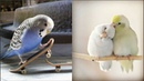 Cute Parrots Videos Compilation cute moment of the animals - Soo Cute! 4