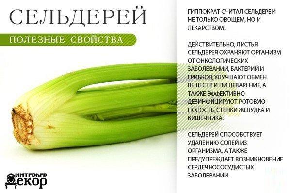 Такая полезная зелень! Сохраняем, узнаем больше о полезных свойствах продуктов…. (8 фото) - картинка