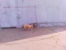 наши друзья собаки