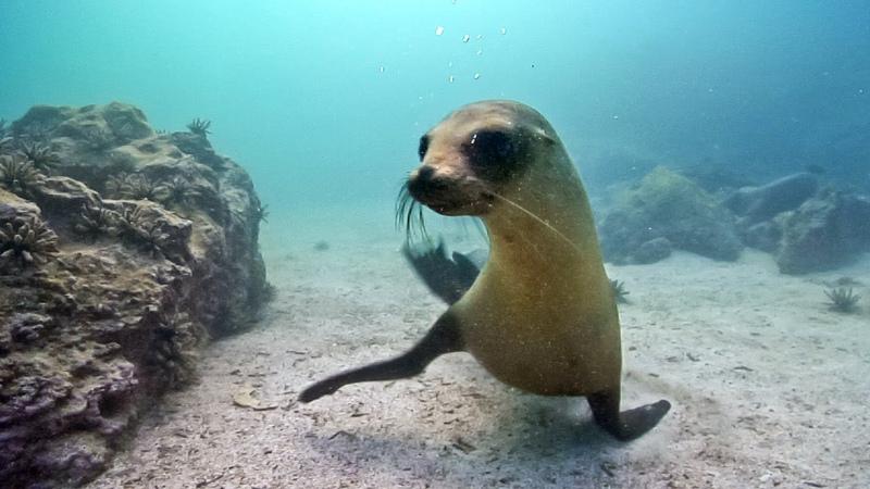 Underwater Nature Marine Life | Stock Footage Showreel (Demo Reel) HD