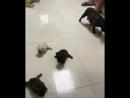 Скользящие щенки