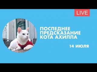 Прогноз кота Ахилла на матч за третье место. Онлайн-трансляция