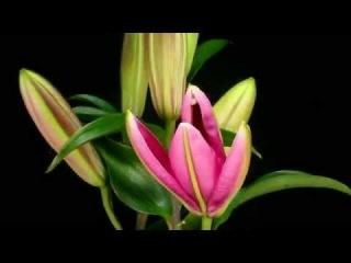 Как распускаются цветы Анимационная команда «ORANDA» (ОРАНДА) г. Магнитогорск