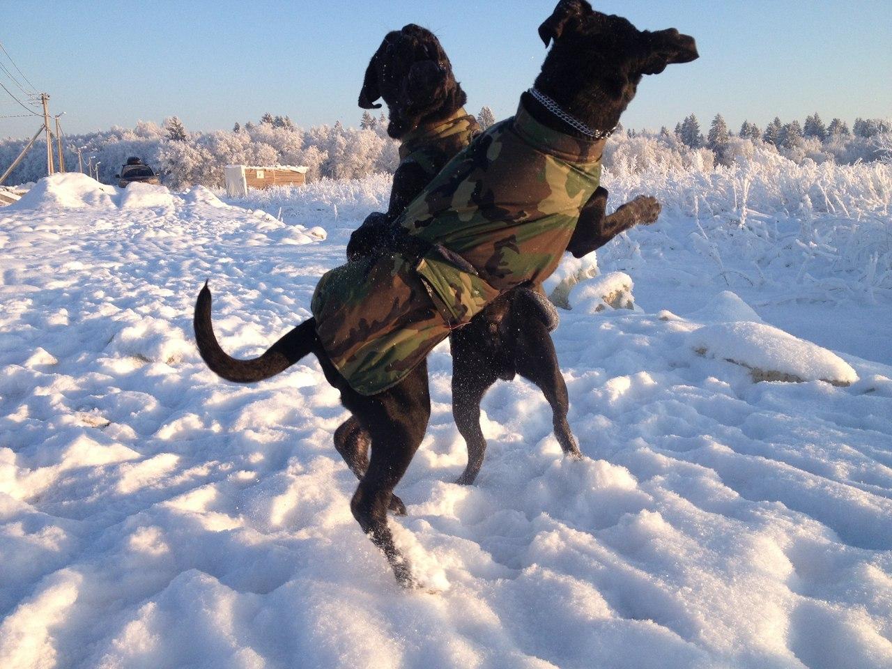 Дополнительная отшивка попон для собак