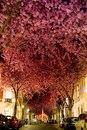 Cамые волшебные улицы мира, украшенные самой природой