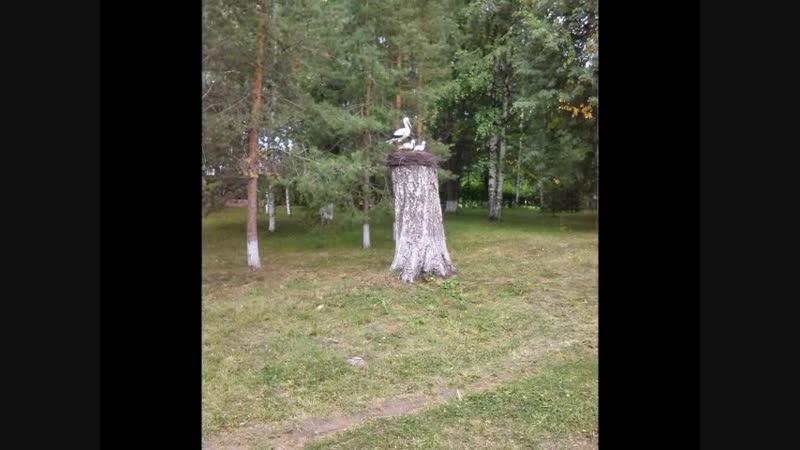 с. Варнавино и Н.Новгород...август 2018