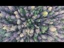 Небольшое гипнотическое видео леса с нашего производства