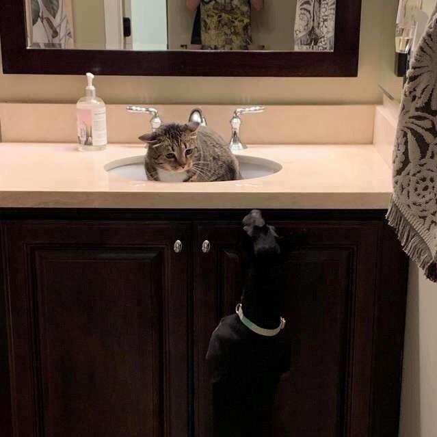 Когда коту купили собаку))