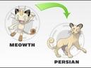 Эволюция Мяута Покемон Го meowth