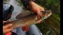 ХАРИУС! рыбалка на лесной речке р. Ерна! На водомете по малым рекам!