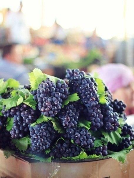 Стиглий синій виноград