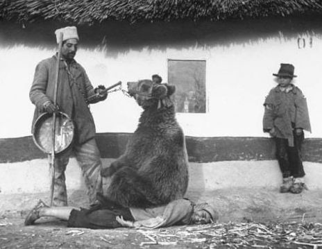 На фото: терапевтический сеанс лечения боли в спине при помощи медведя. Румыния.