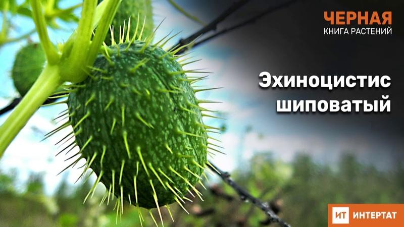Черная книга Татарстана