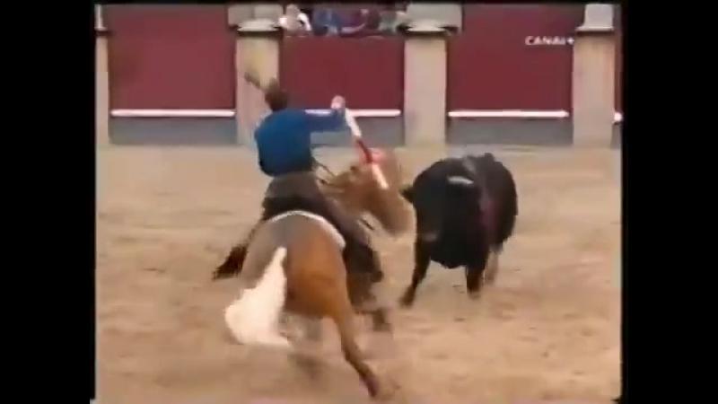 Лошади! Что делает эта лошадь Вау! Лошадь vs бык