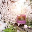 В апреле в Японии проходит замечательный праздник Ханами…