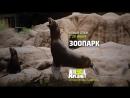 Зоопарк - Animal Planet