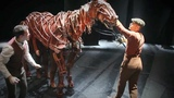Behind the scenes at War Horse Dressing Room Confessions