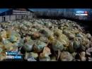Вести Алтай ВГТРК 20.07.2018. Рубцовск. Свалка медицинских отходов.