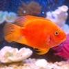 Поиск аквариумных рыбок