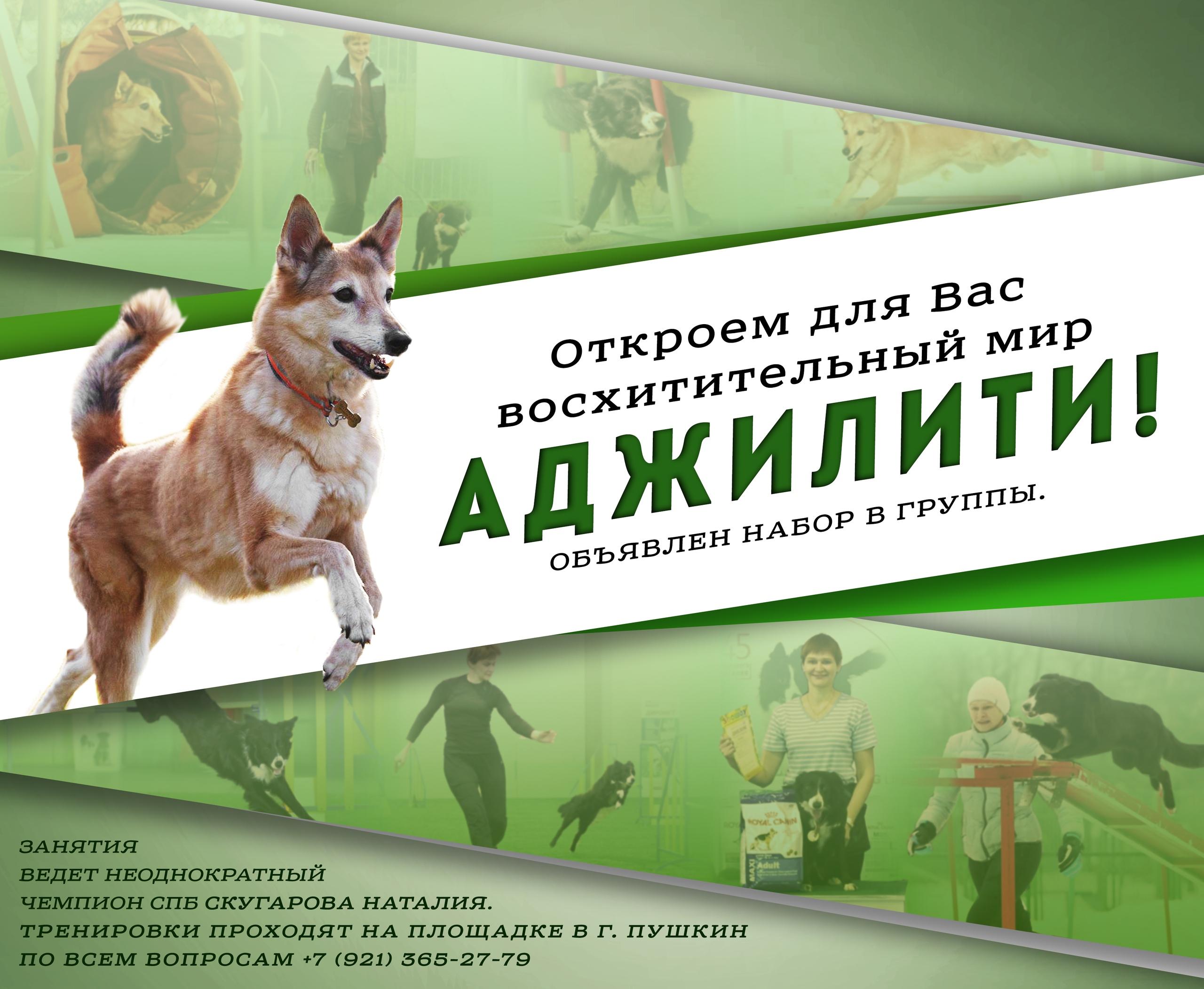 Реклама тренировок по аджилити.