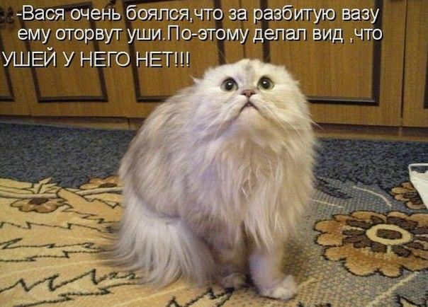 Все будет хорошо фото с котом