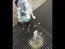 Я вам хочу сказать что далеко не все собаки догадаются и осмелятся пить из такого фонтана Мои домашние точно нет 🙈 Пузя оче