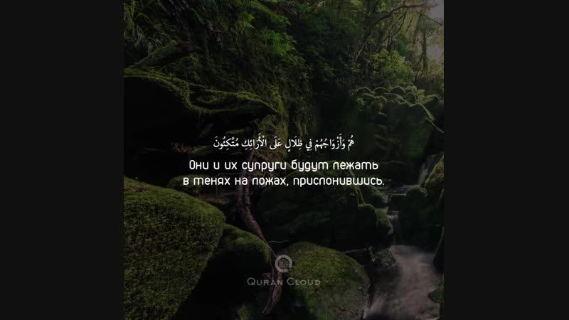 📜Сура 36 «Я Син», аяты: 55-58