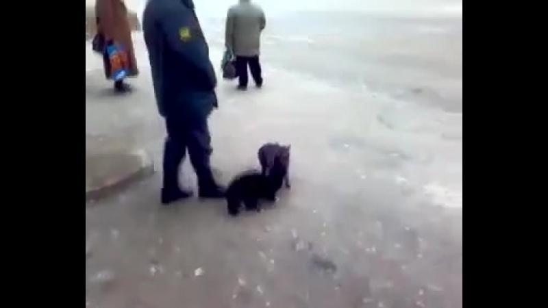 Мент разгоняет котов.avi