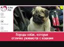 Породы собак которые отлично уживаются с кошками на ilikepet