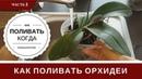 Полив Орхидеи Как Определить Когда и Как Поливать Орхидеи
