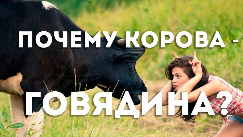 Почему мясо коровы называется говядина В.Сундаков