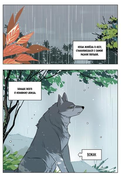 捡了东西的狼。下雨天的狼王 / Волк и найдёныш. Вожак в дождливый день.