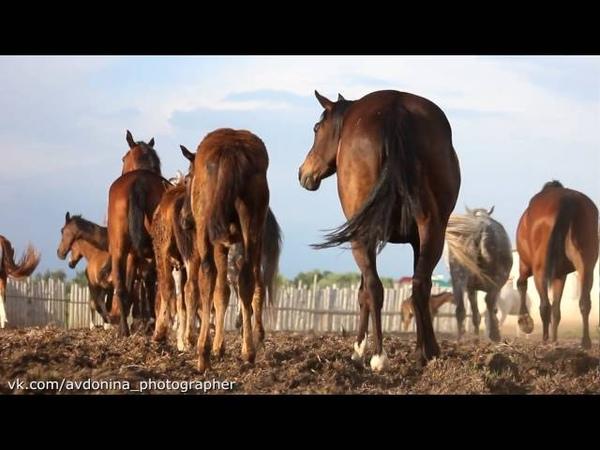 ООО Стрелецкое Лошади в Данкове