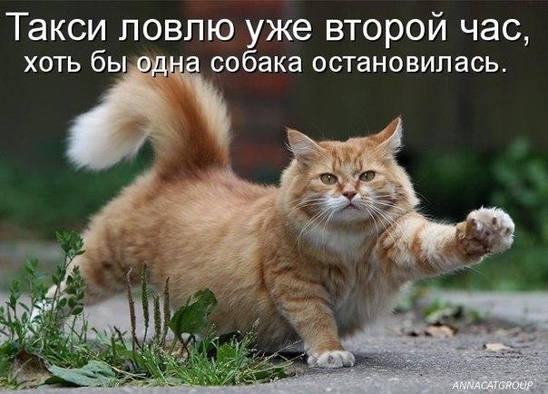 http://cs417424.userapi.com/v417424187/8c5/dx39D-V3QtI.jpg