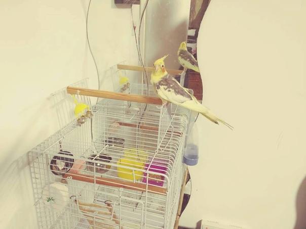 ЦВЕТОК ПО ИМЕНИ КУКИЧКА Попугай жил в клетке. В клетке на балконе. Его никогда не выпускали. Через прутья он видел кусочек жизни в квартире. И тогда он заливался красивыми песнями. Ему казалось,