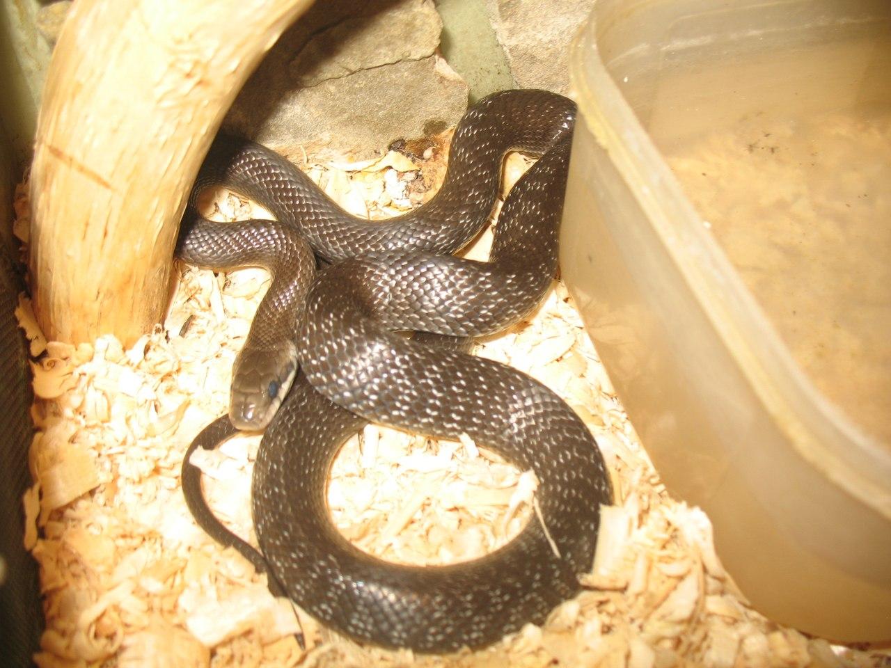 Все о змеях в домашних условиях