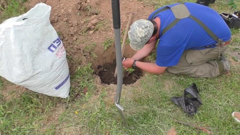 Правила посадки саженцев деревьев или как посадить дерево