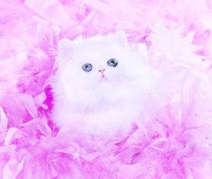 Котёнок это благодатний дар природи