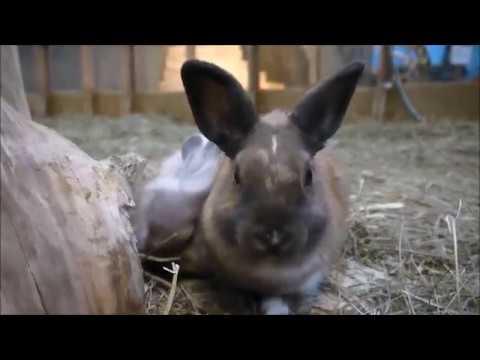 Кролики: большая и дружная семейка в зоопарке Multizoo